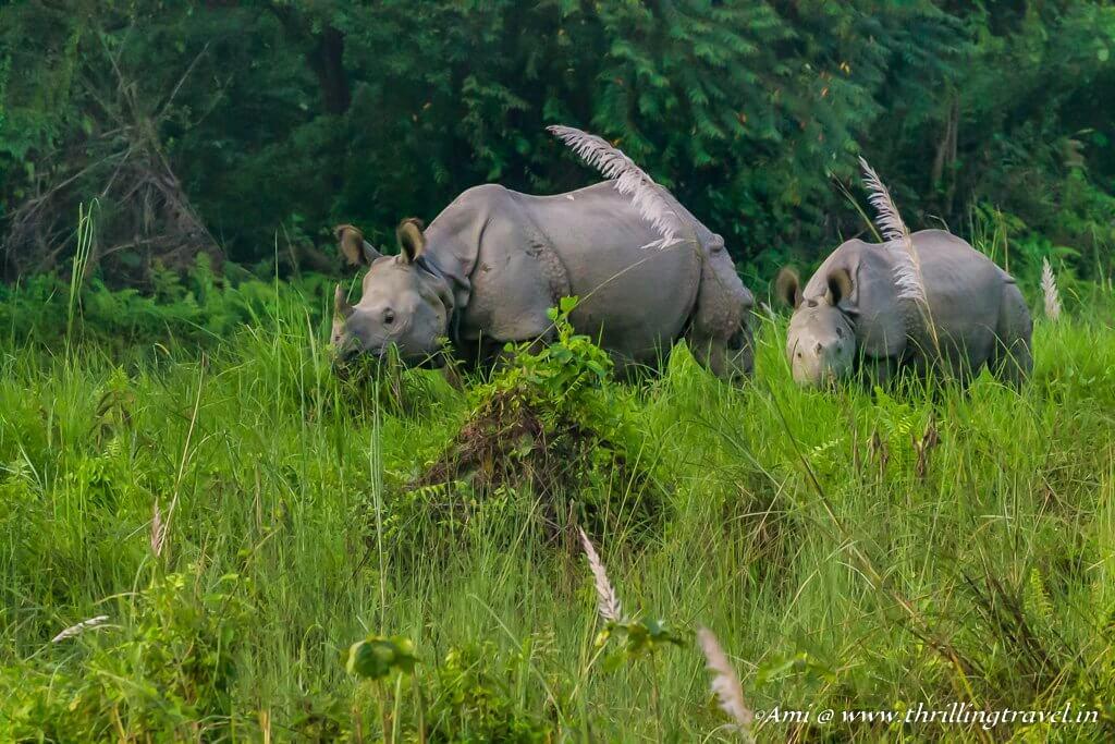 Travel Flashback 2017 - Spotting Rhinos in Chitwan, Nepal