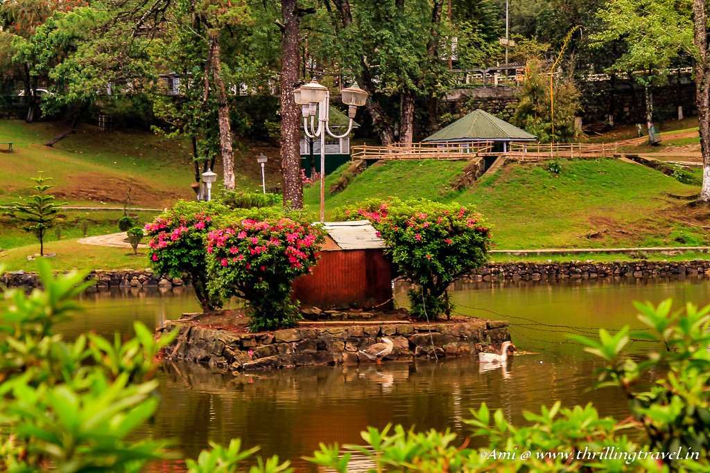 Date with the ducks at Wards Lake in Shillong
