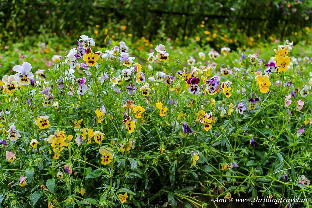 At Lady Hydari Park in Shillong