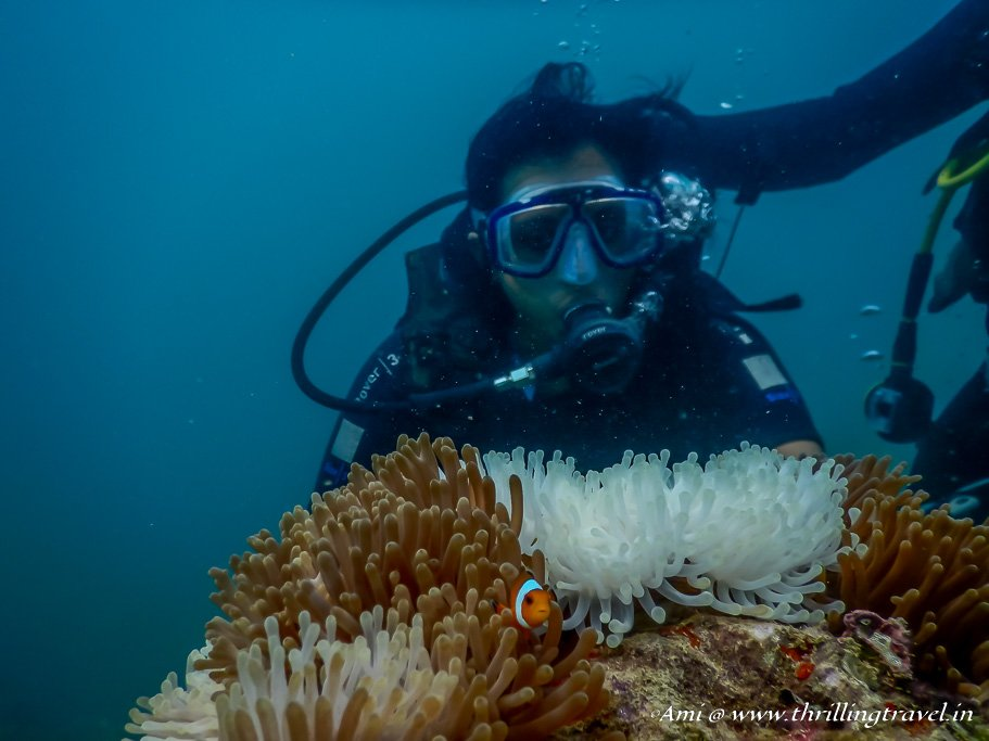 First View of the Corals during a scuba dive at Havelock