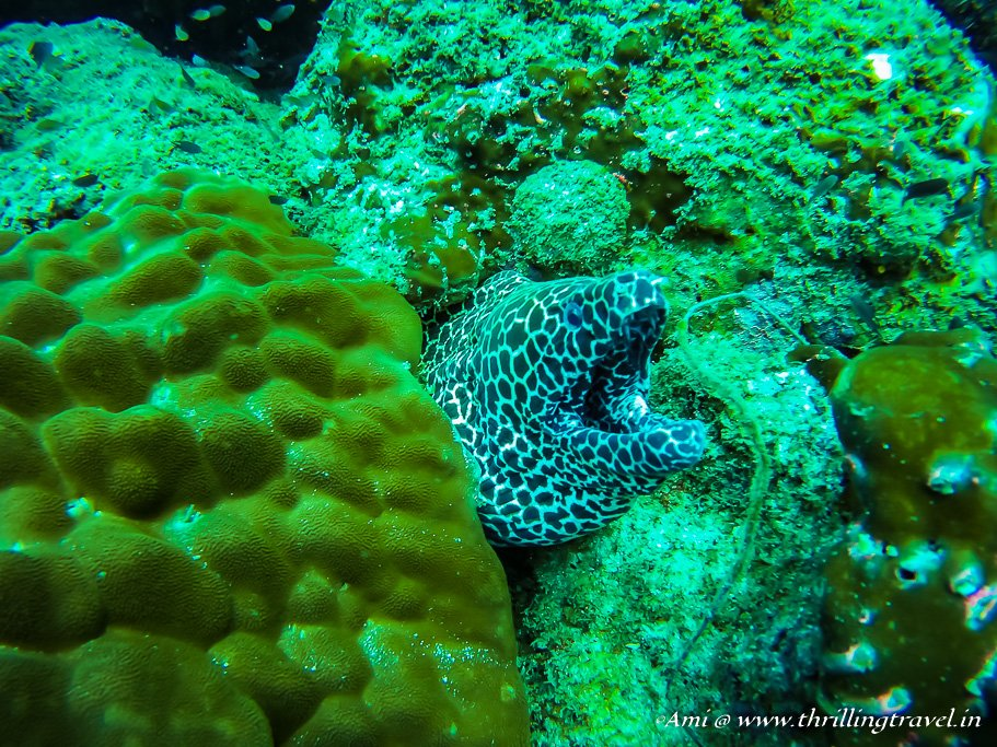 Moray Eel spotted at Netrani Islands during my PADI Scuba Diving Course