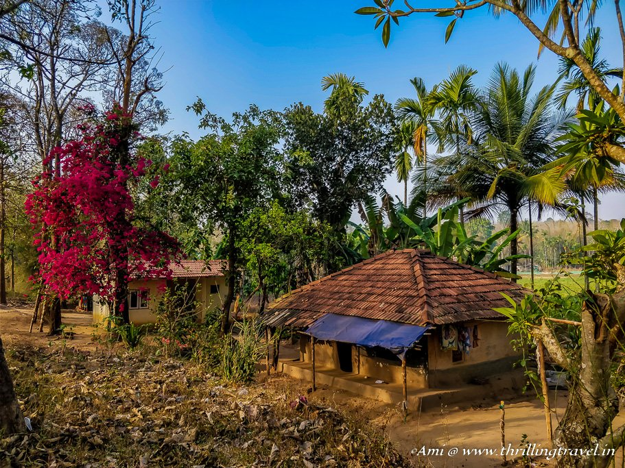 A little modern Tribal home _Wayanad