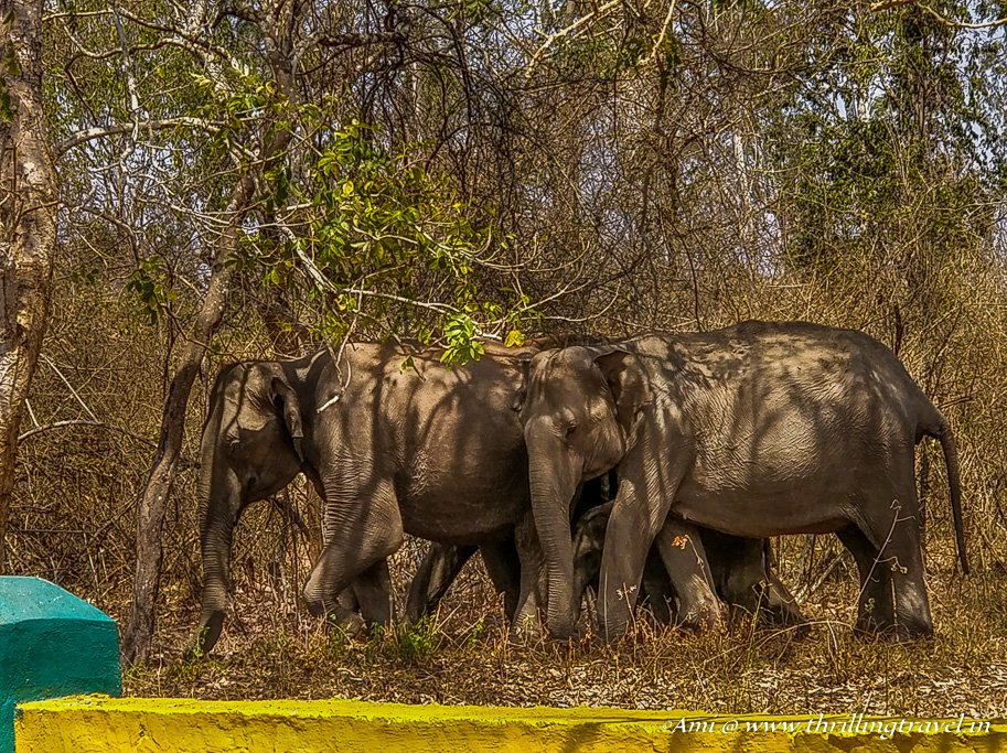 Elephants from Wayanad Wildlife Sanctuary