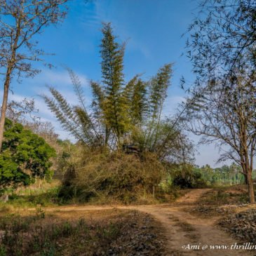 Wayanad Nature Trails – Kuruva Island to Wayanad Wildlife Sanctuary