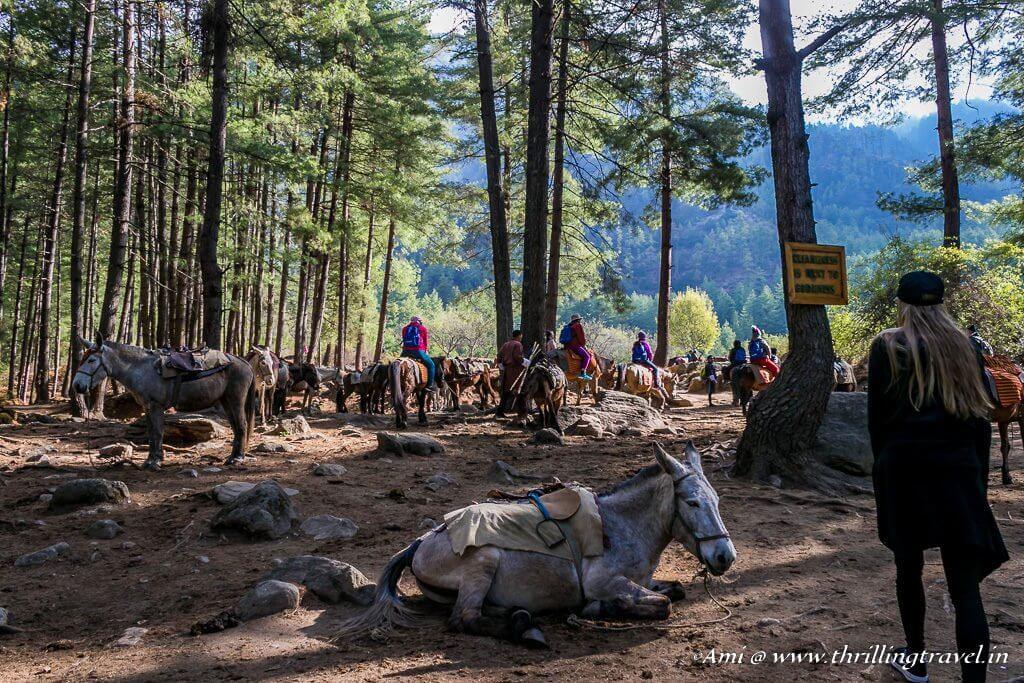 Start of our Paro Taktsang Hike