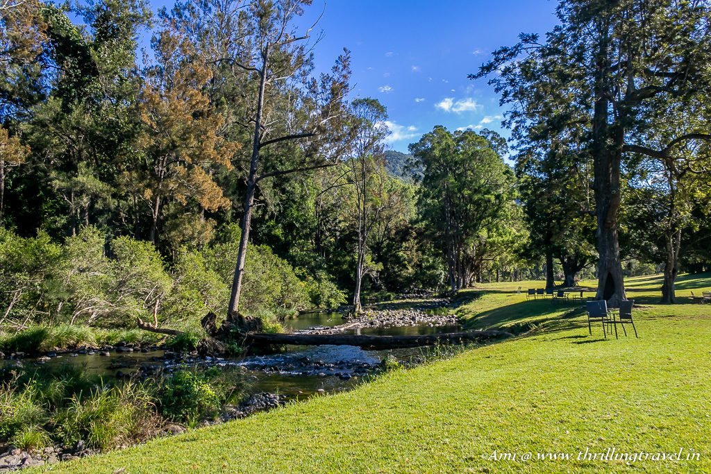 Streamside at O'Reilly Vineyards in Canungra