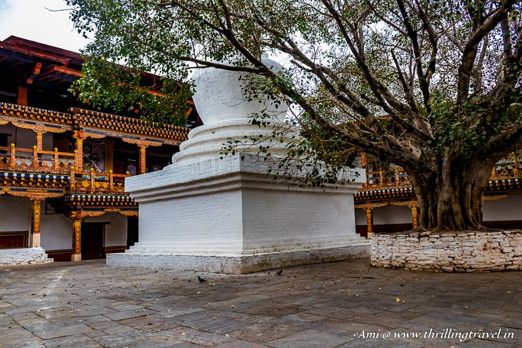 The Stupa & Bodhi Tree in the first Dorchey of Punakha Dzong