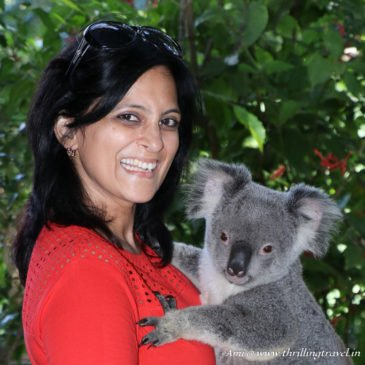 Meeting the Koalas at Currumbin Wildlife Sanctuary, Gold Coast