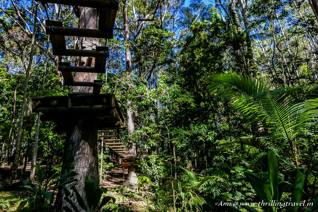 Treetop Ropeway across Currumbin Wildlife Sanctuary