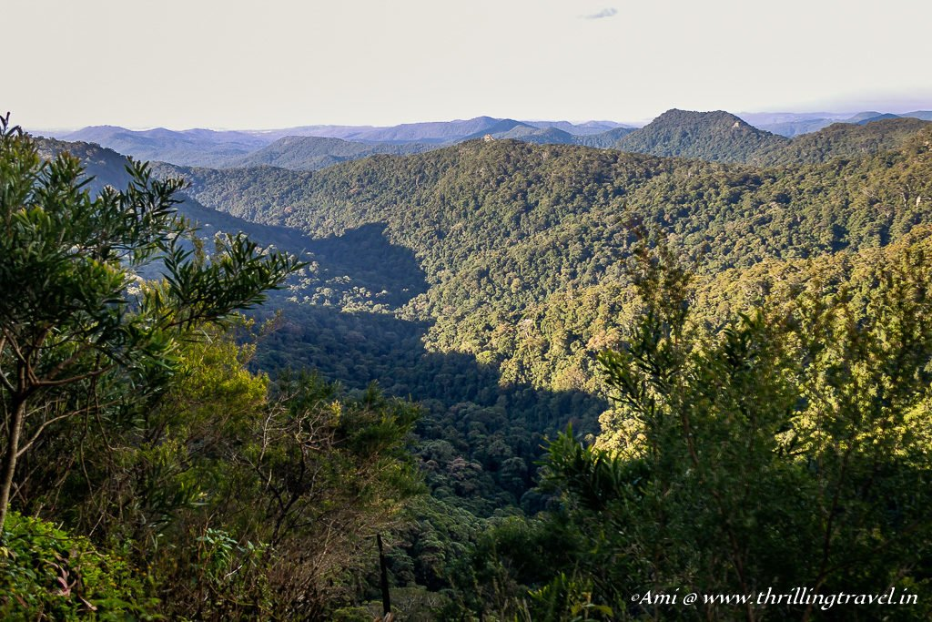Canyon Lookout in Springbrook National Park