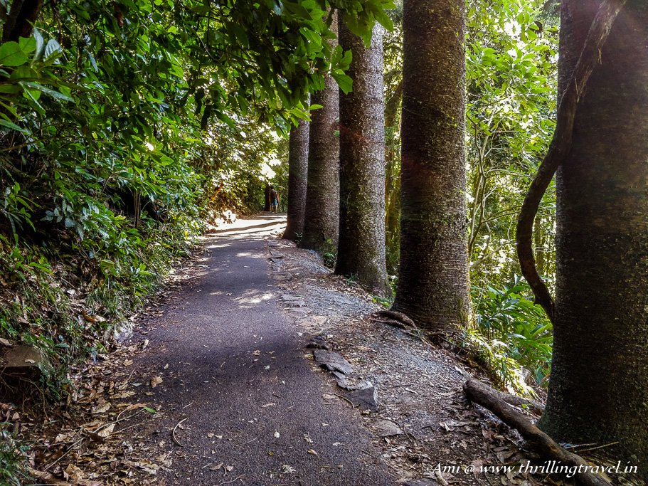 The walking trail to Natural Bridge, Springbrook National Park, Queensland