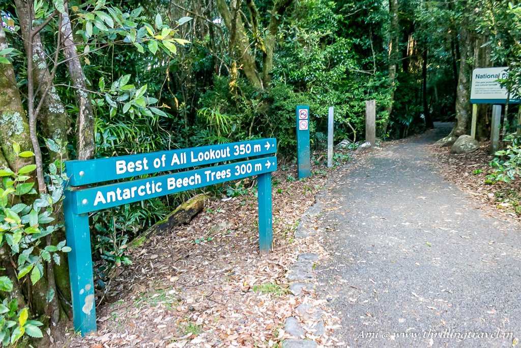 The trail to Best of All Lookout, Springbrook National Park
