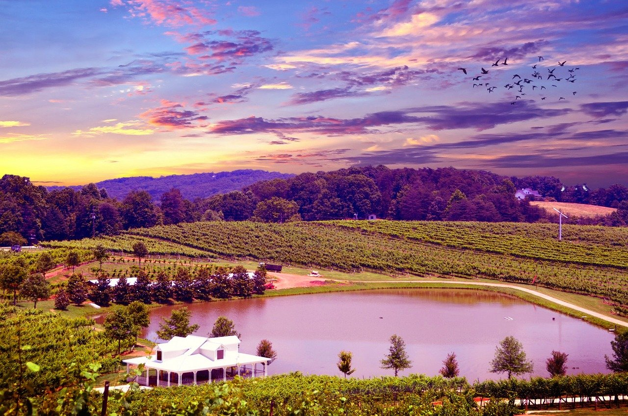 Things to do in San Francisco - Napa Valley