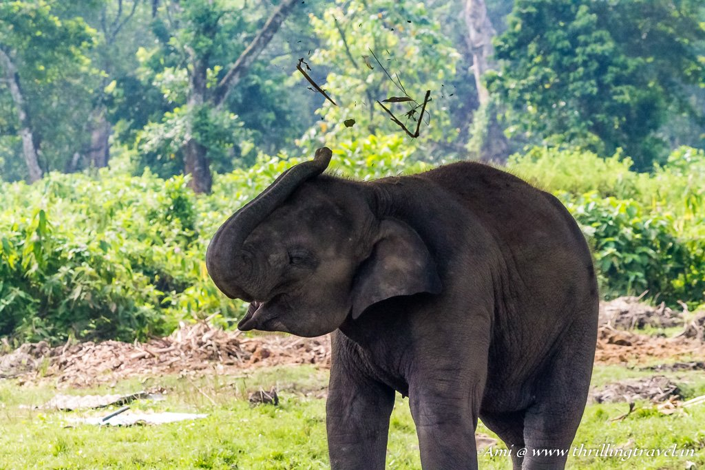 Playful elephant at Chitwan Jungle