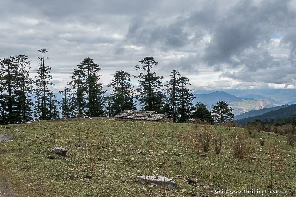 Alpine grasslands along the way