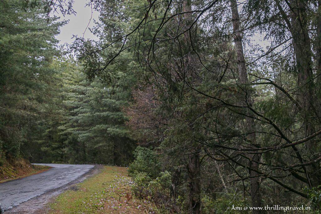 Drive along to Chele-La Pass