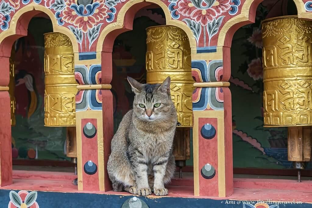 Cat among the wheels ;-)