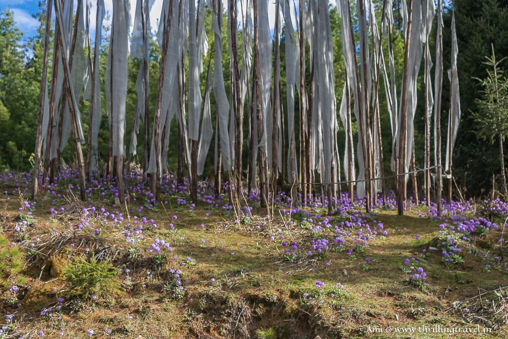 Flowers blooming during Spring - along the way to Chele La Pass