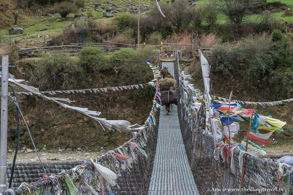 Suspension Bridge in Haa Valley