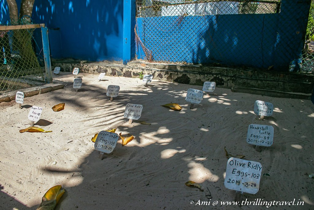 The Sand Pit for burying the eggs at the Turtle Hatchery at Ahangama