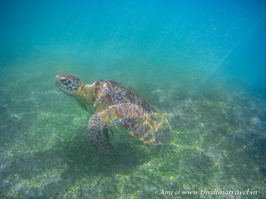 Snorkeling with the turtles in Mirissa - our first encounter with the turtle