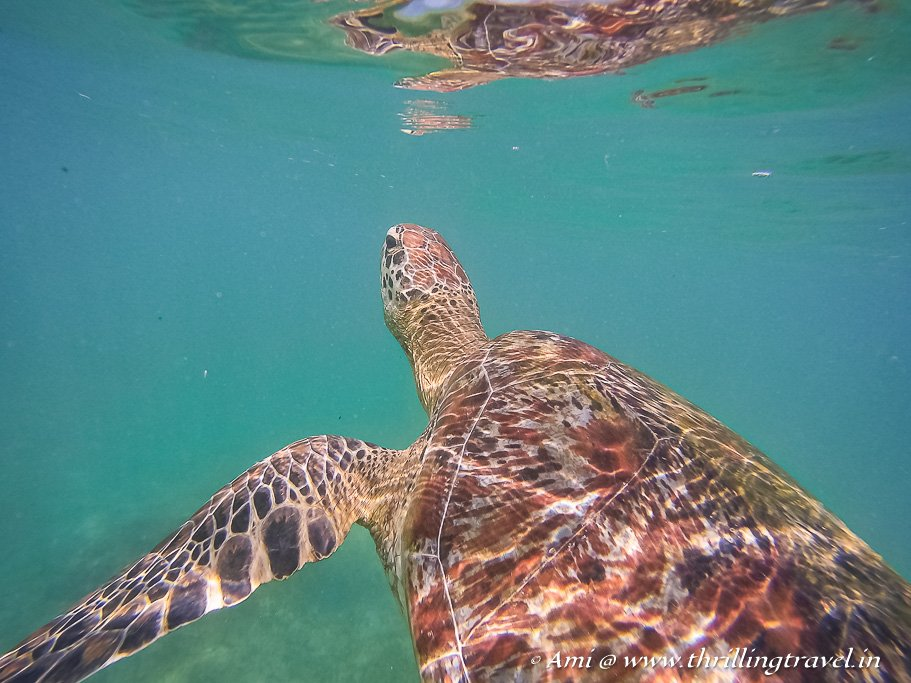 Snorkeling with the turtles in Mirissa
