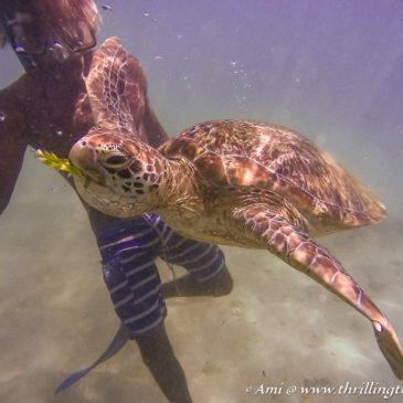 Tidings from the Turtles – Snorkeling in Mirissa, Sri Lanka