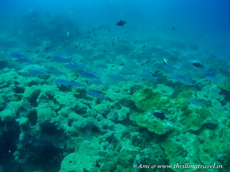 Scuba Diving - one of the things to do in Mirissa