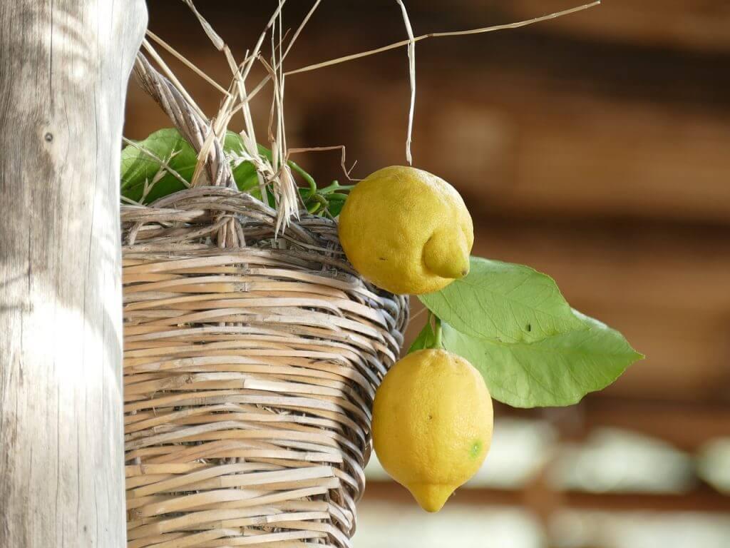 Lemon Farms of Sorrento