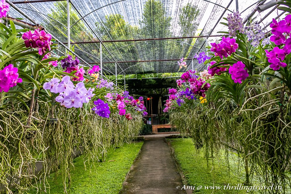 Bai Orchid Farm - a Chiang Mai Attraction