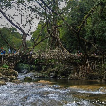 Unraveling the mysterious Living Root Bridge, Meghalaya