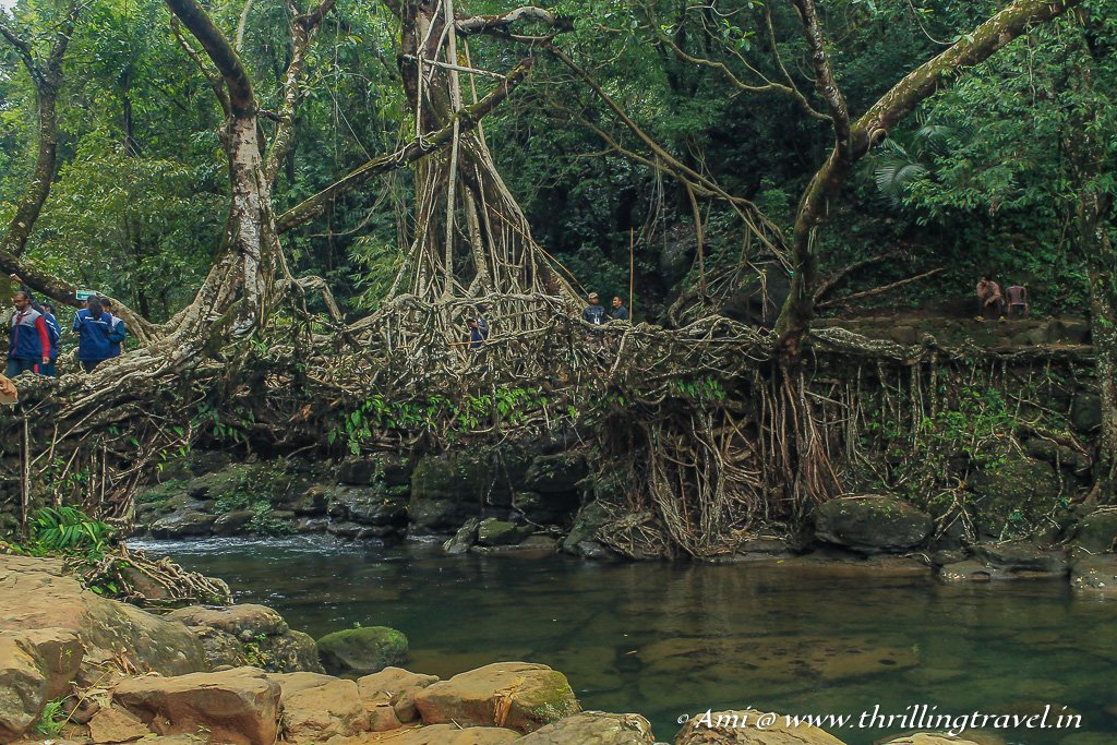 Sturdy, long and really old - check out the facts about these Living Root Bridges in Meghalaya