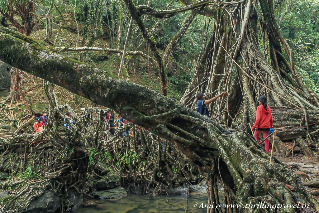 The first glimpse of the Mawlynnong Living Root Bridge