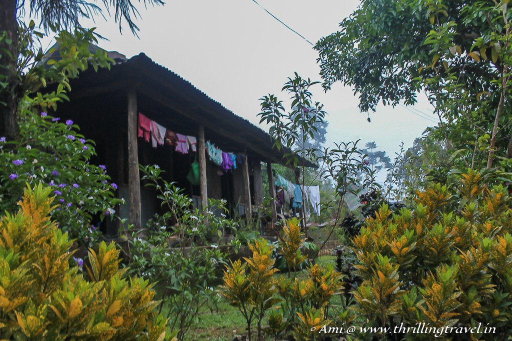 Natural green hedges surrounding simple houses in Mawlynnong village