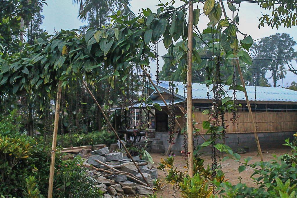 The natural curtain of orchids shielding a house in Mawlynnong village