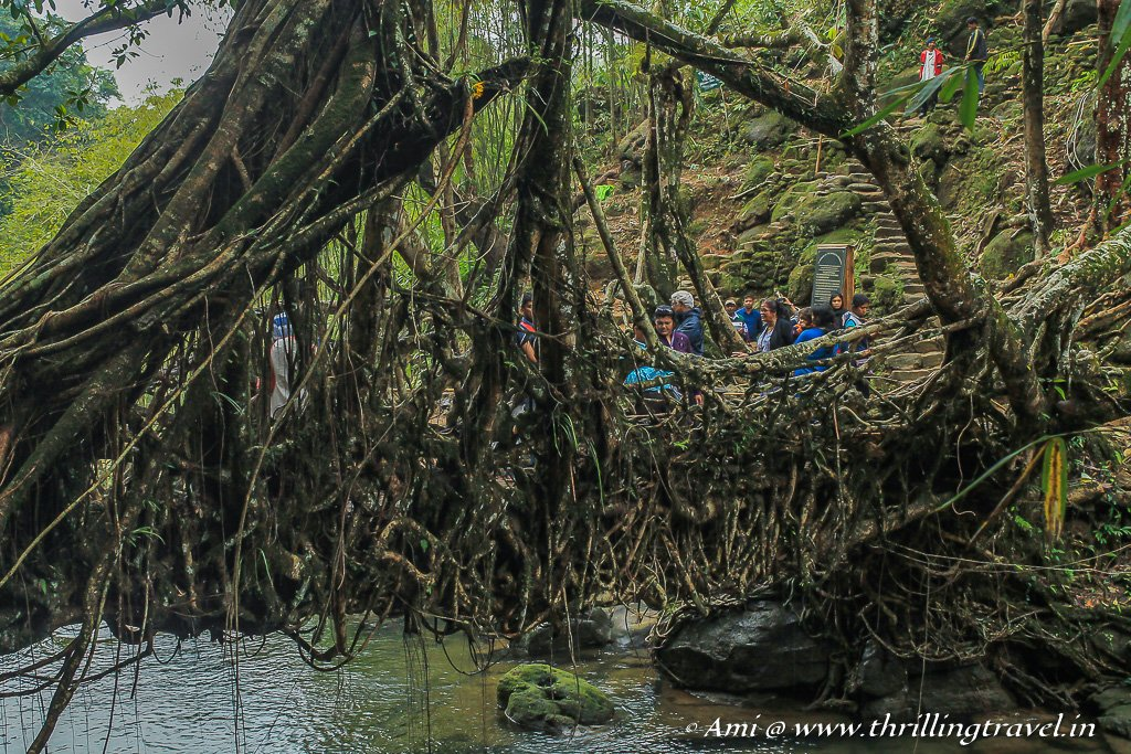 The Sturdy Living Root Bridge can hold an army of 50 people