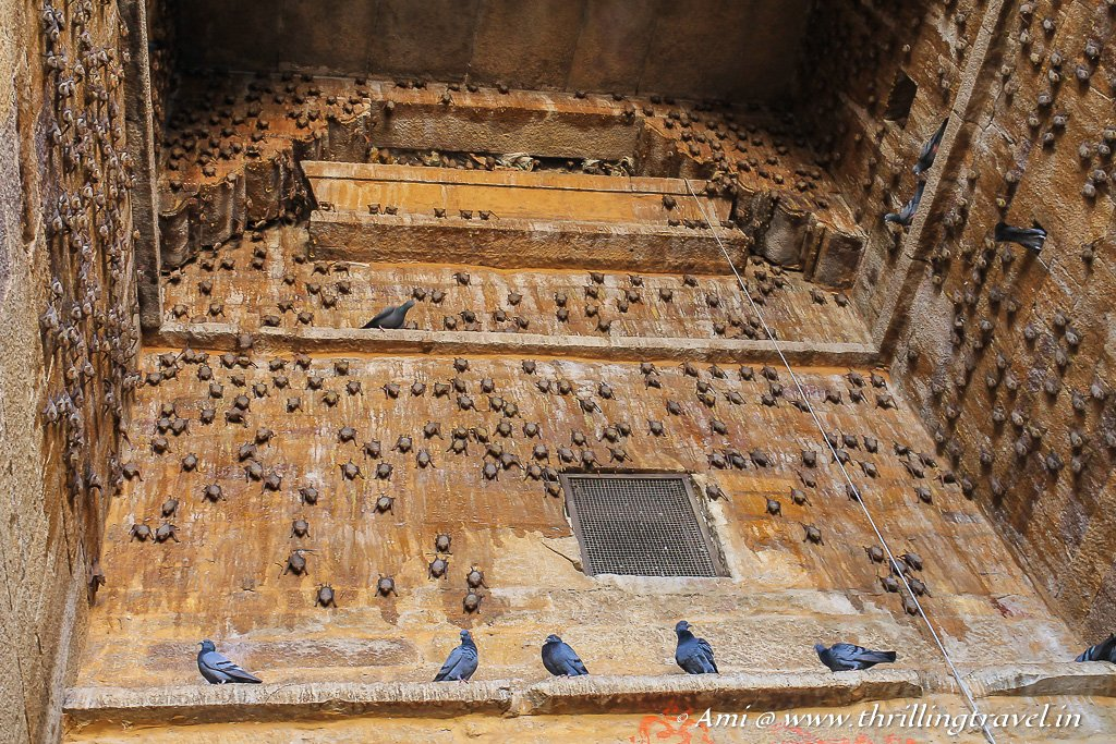 Through Jaisalmer fort gates -the home of bats