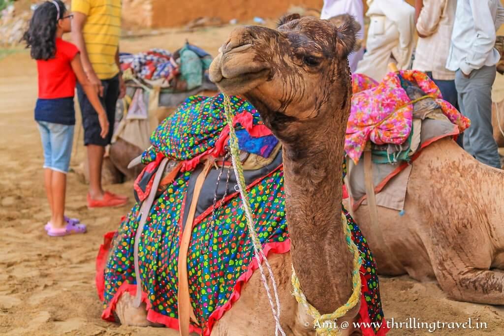 Jaisalmer Camel Safari Tips