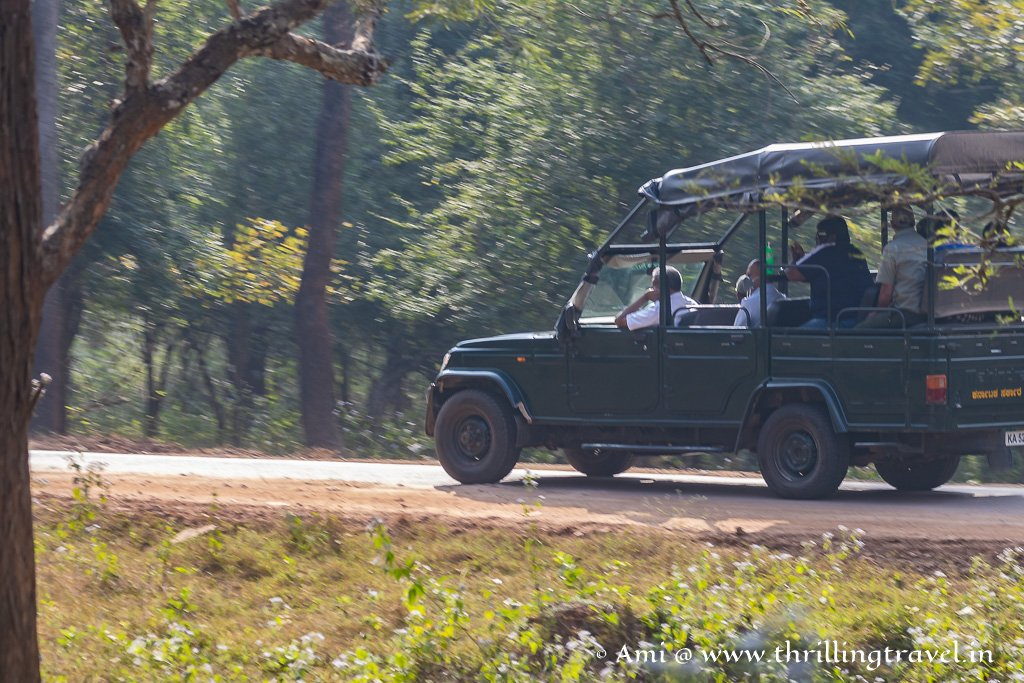 Kabini Jeep Safari is ideal to spot the bigger mammals and the Cats