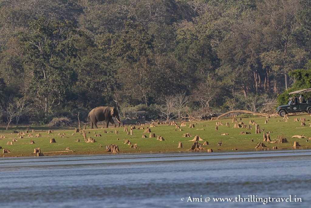 Zone B of Kabini forest that is close to the river