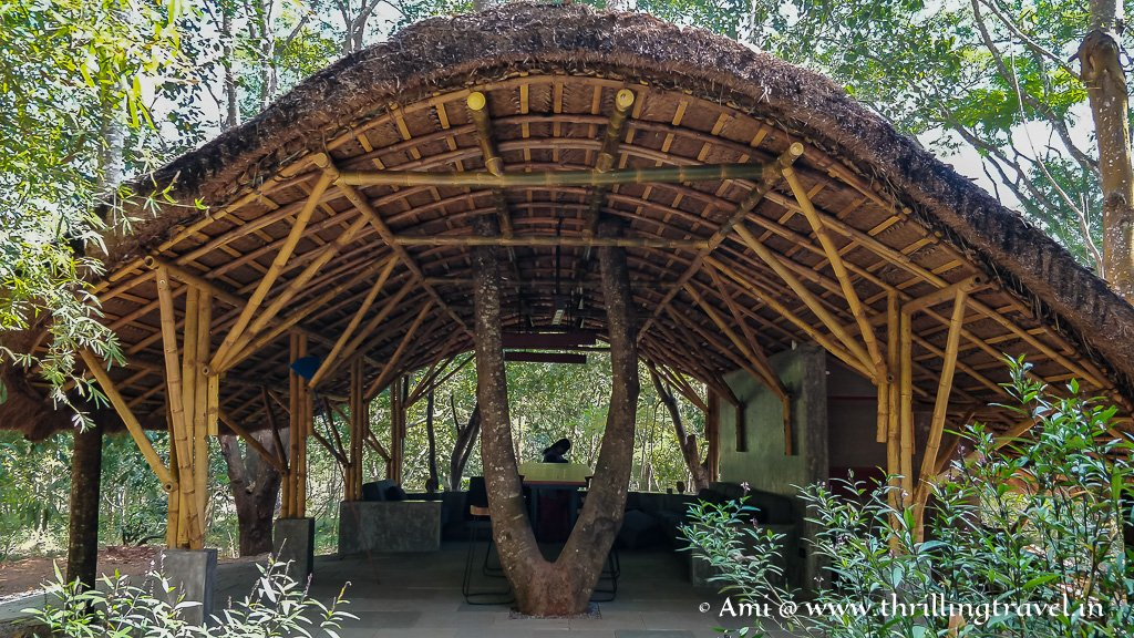 The outdoor sit-out at Kaav that is built around a living tree