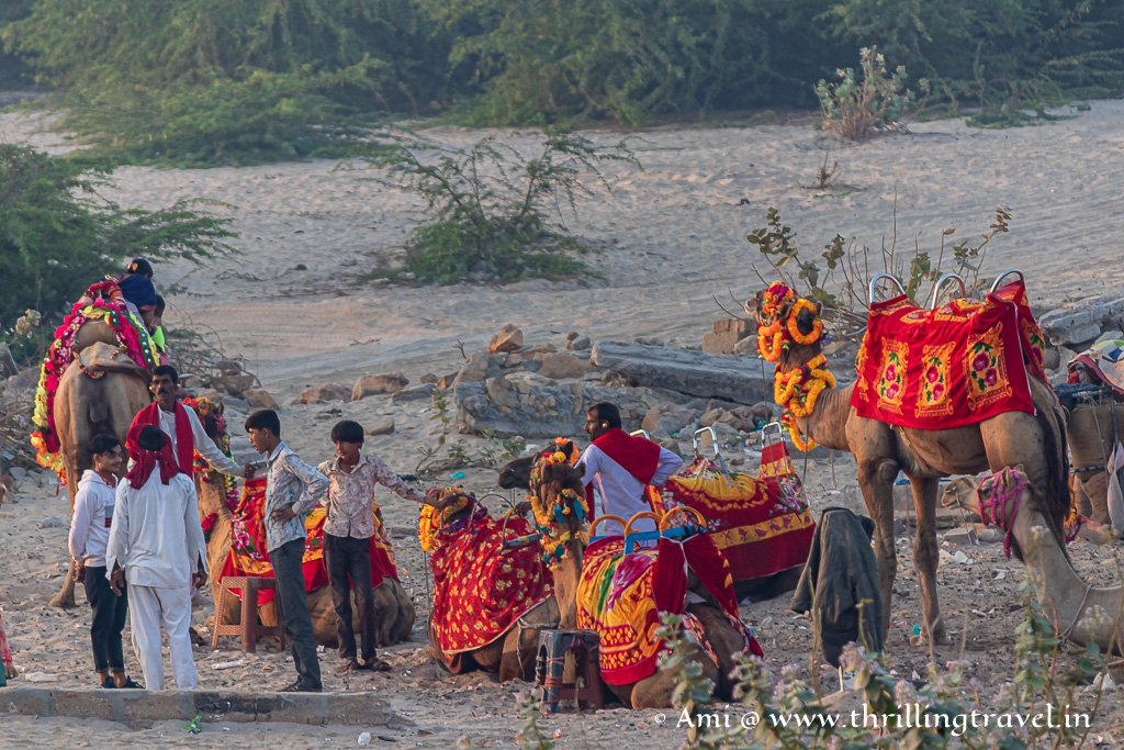 Camel rides available on the island opposite Gomti Ghat in Dwarka